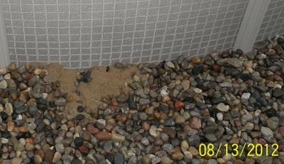 Sand Coming Out From Under Pool