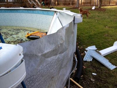Pool Damage From Tree