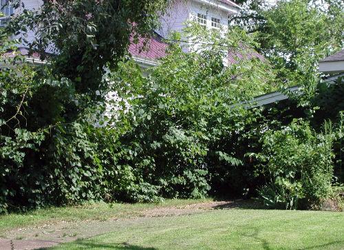 living shade trellis