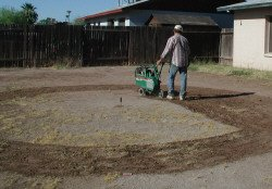 remove all vegetation