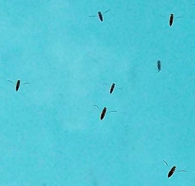 Water Bugs In My Pool